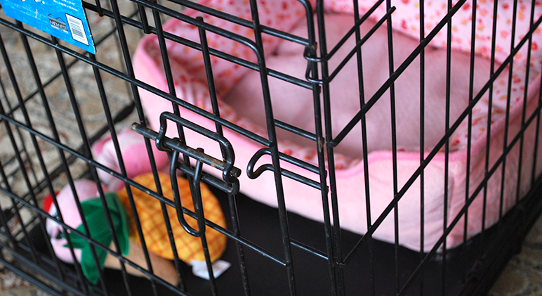 To crate or not to crate … that was my big question! See the benefits of crate training and the 5-step crate training success plan!