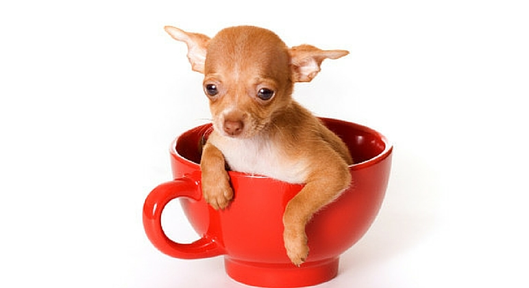 Pups in cups 2