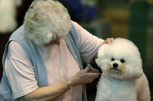 dogs that look like their owners 8