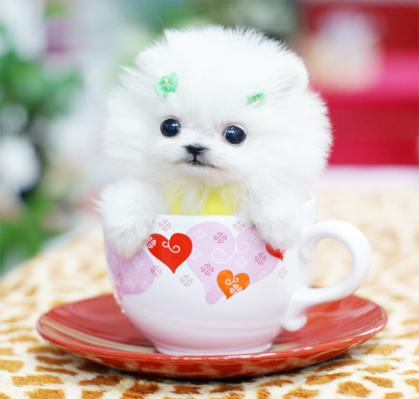 Pups in cups 5
