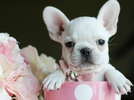 Pups in Cups 4