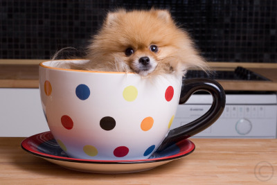 pups in cups 11