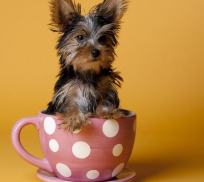 Pups in cups 15