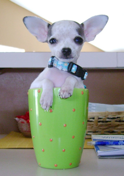 pups in cups 12