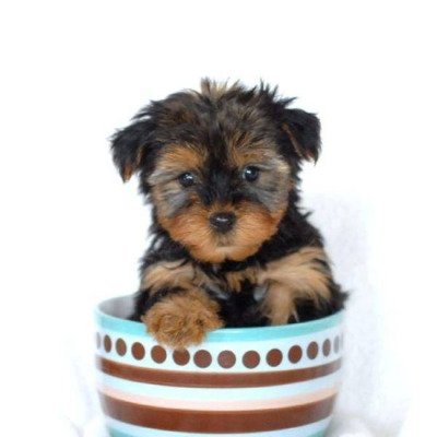 pups in cups 10
