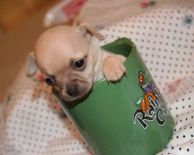 pups in cups 8