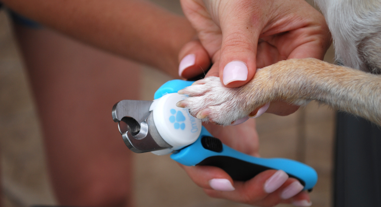 Puppy nail trims don't have to be a bad experience. Find out how to cut your dog's nails without being afraid of hurting your fur baby!