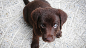 commands to teach your puppy