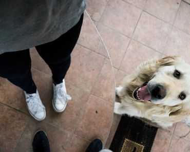 How To Get Your Dog To Stop Jumping On Guests