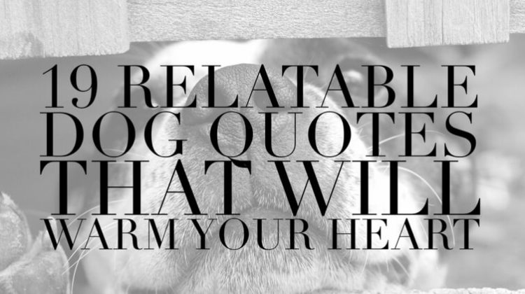 19 Dog Quotes