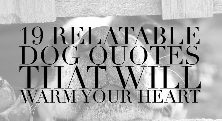 60 Relatable Dog Quotes That Will Warm Your Heart Proud Dog Mom Cool Quotes For Moms