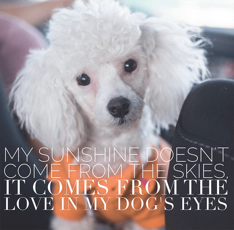 19 Relatable Dog Quotes That Will Warm Your Heart Proud