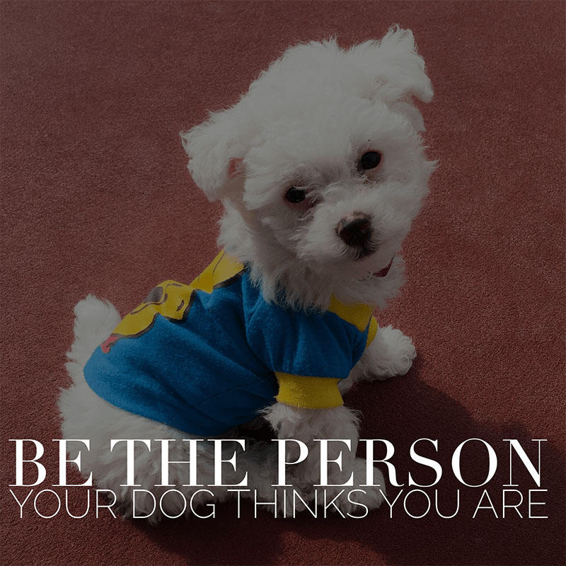 Dog Quotes - Be The Person