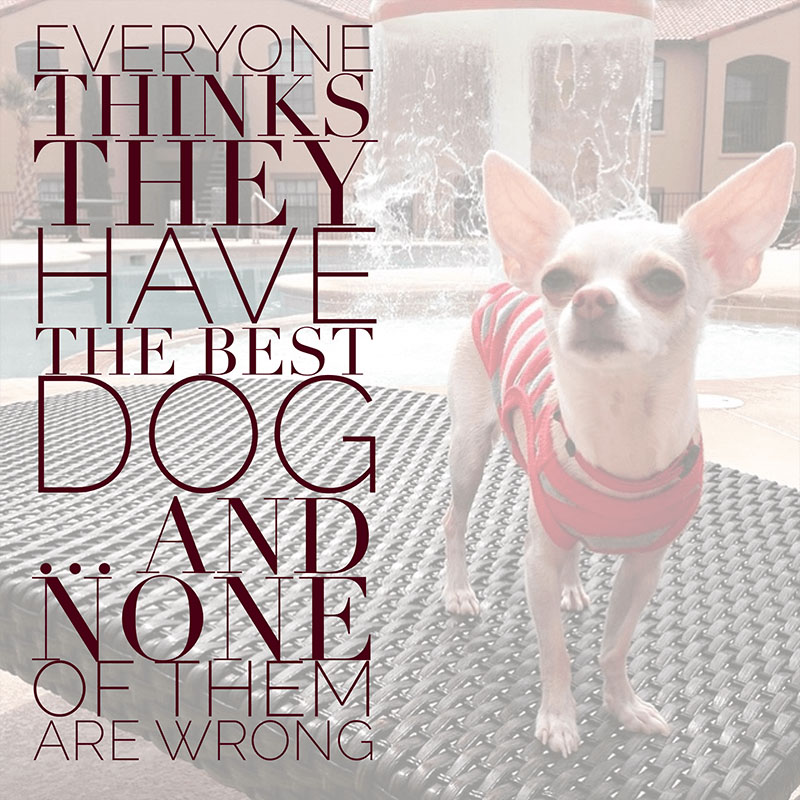 Dog Quotes - Best Dog