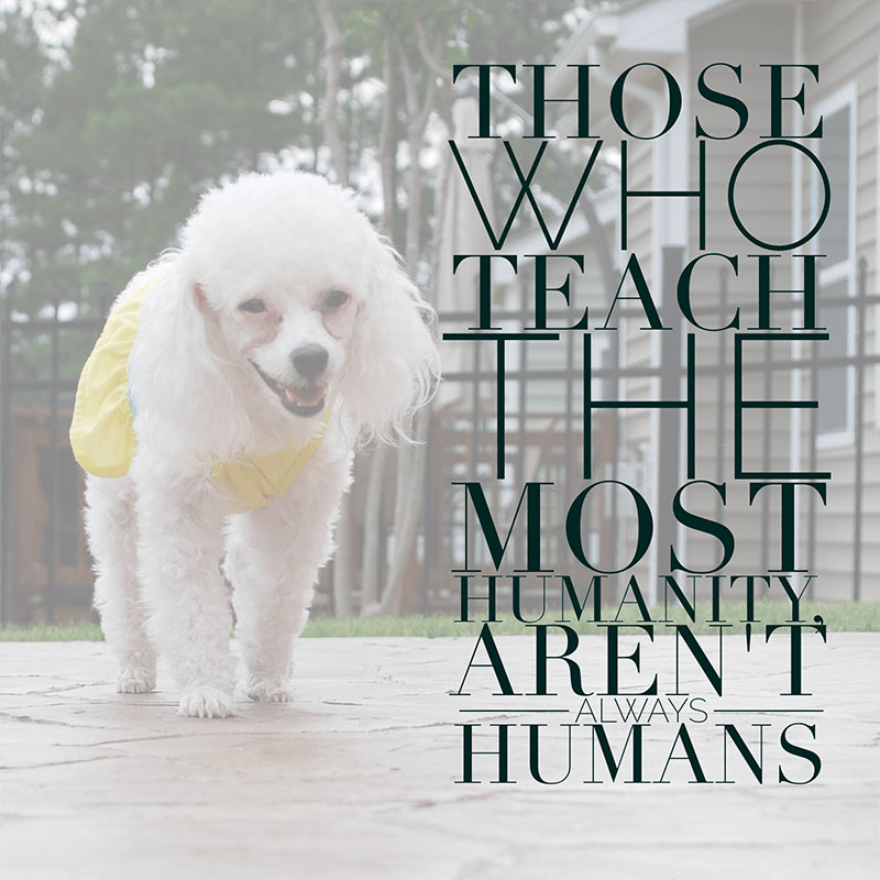 Dog Quotes - Humanity