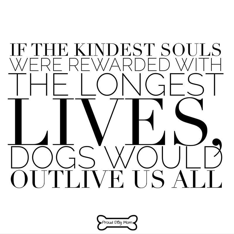 Dog Quotes - Long Lives