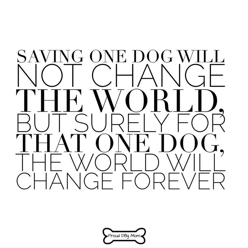Dog Quotes - Rescue