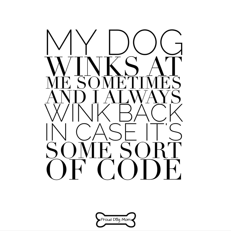 Dog Quotes Wink