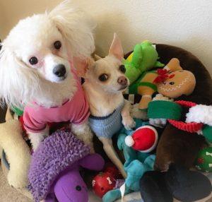 Diego and Gigi toys