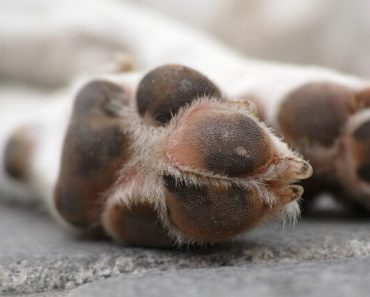 Does your dog constantly bite and lick his paws? If you answered yes, you're not alone. Find out the most common cause and what you can do for your pup!