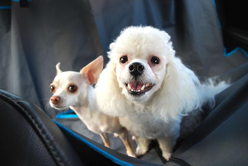 dogs-on-hammock