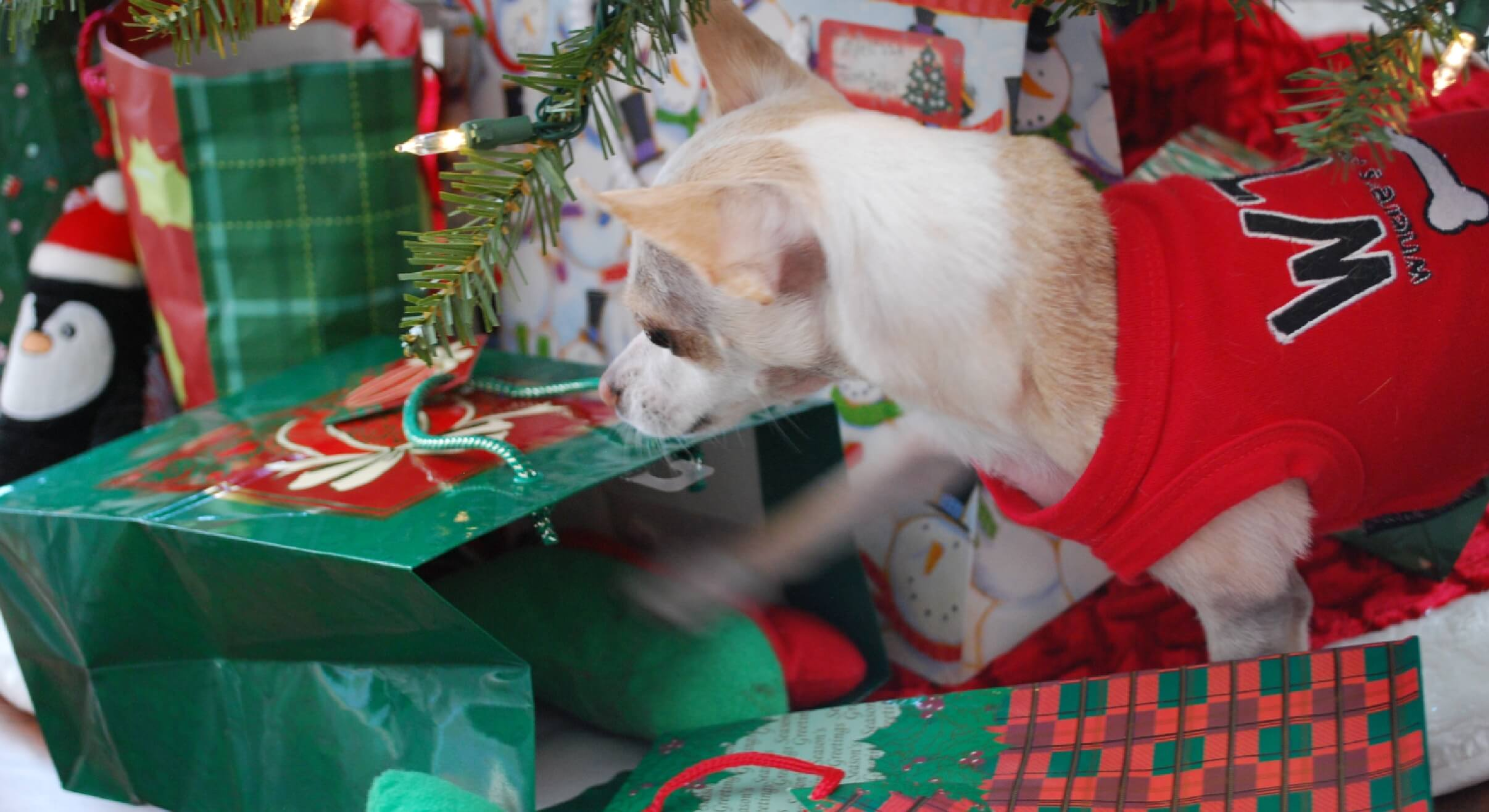 Top 8 Christmas Gifts Your Dog Will Thank You For - Proud Dog Mom