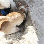 diego-digging