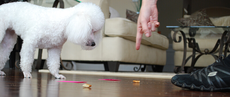 dognition-assessment-point-game