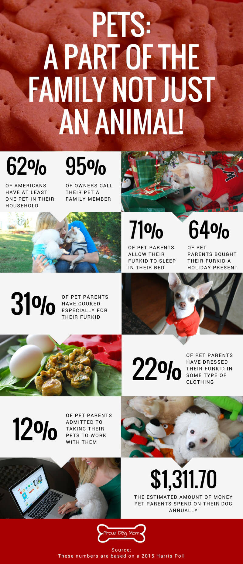 Are Pets Family Members? Check Out This Poll!