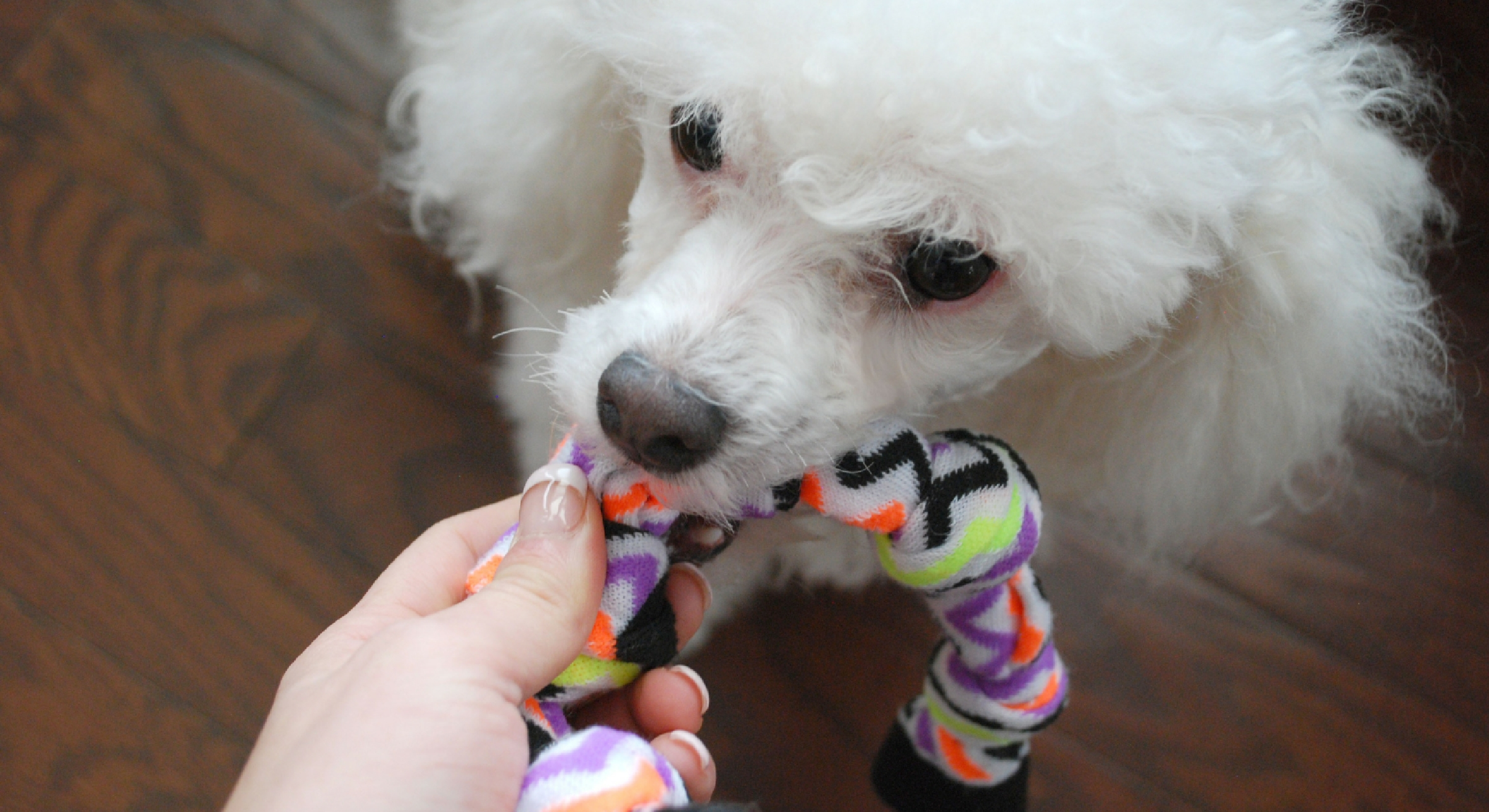No Sew DIY Dog Toys 4 Ways To Turn Old Socks Into Puppy Play