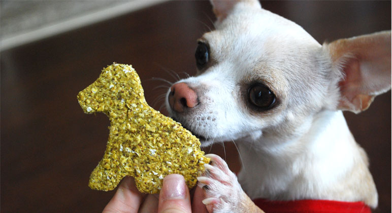 Eating a diet rich in anti-inflammatory foods doesn't only benefit us humans, but also our canine kids! Check out this easy and healthy dog biscuit recipe!