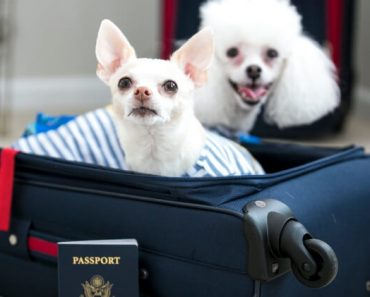 Planning on traveling abroad and want your pooch to tag along? There are some things you need to know before booking your flight. Read on!