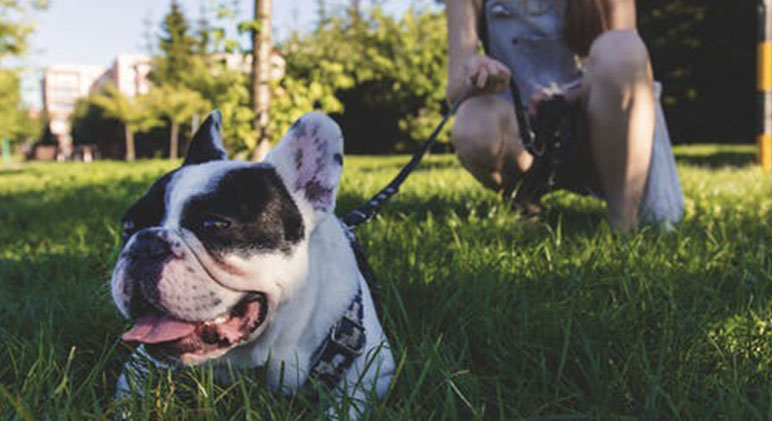 As your dog ages, it's important to focus on his mental and physical health. Check out these five senior dog fitness ideas. Why not start them today?!