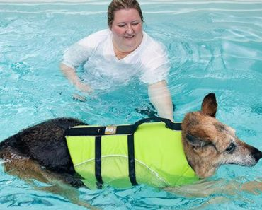 Have you ever heard of canine water therapy? Check out this Q&A with a licensed professional and find out how your dog can benefit!