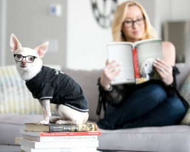 From training tips to understanding of how dogs perceive the world — there's a book for everything! These 10 reads are both fascinating and resourceful.