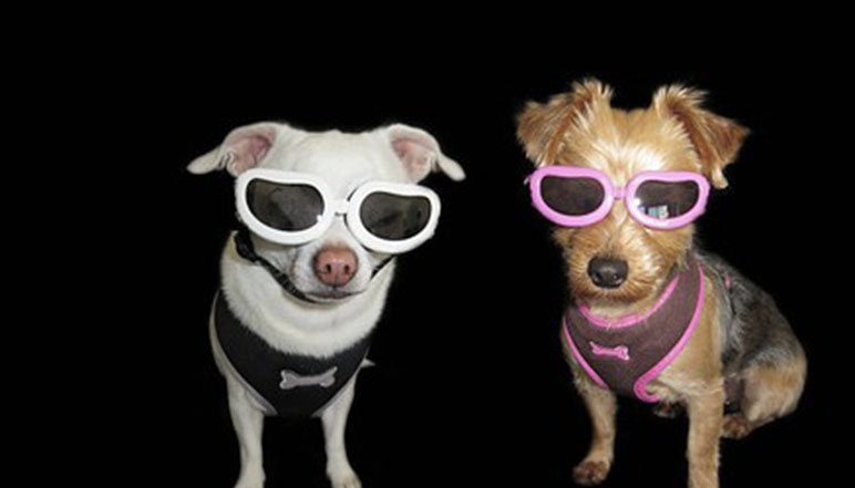 Everyone is talking about the solar eclipse. Along with protecting your own eyes, what about Fido's? Read on to find out how you can protect your pooch.