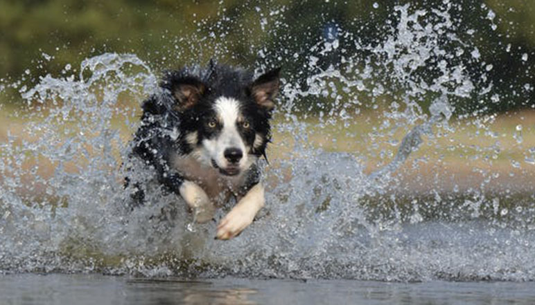 Sometimes it's really clear why dogs shake their bodies. Other times, not so much. Read on to find out the top five reasons dogs shake their whole bodies.