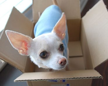 Moving is tough on every member of the family, including the ones with fur and four legs. Find out tips to make the moving process easier on your fur kid.
