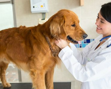 Just like finding the right doctor for human kids can be a daunting task, so can finding the right vet for our dogs. See 4 tips to make the process easier.