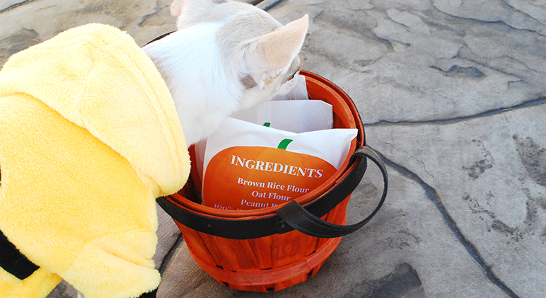 Are you expecting 4-legged guests this Halloween? Along with handing out treats to the humans, make these DIY Trick or Dog Treat Bags for canine visitors!