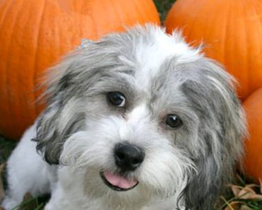 Along with the beauty of fall comes some potential fall hazards that all pet parents should be aware of.Find out the top 7 things to watch for.