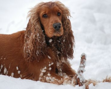 As the winter season approaches, let's take a few minutes to talk about dog care. Here are 7 essential tips to help you plan for the upcoming cold season.
