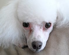 Find out the four warning signs it's time to leave your dog's grooming shop. Plus, tips to finding a reputable and trusted groomer!