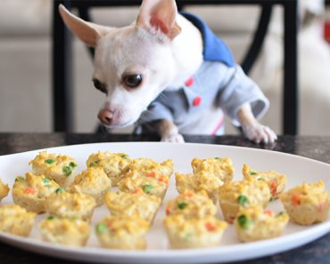 Made from only 5 all-natural ingredients, these mini turkey loaf muffins make a delicious and nutritious dog treat. Get the easy recipe here!