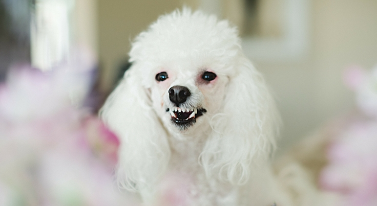 February is National Pet Dental Health Month! To help raise awareness for the importance of canine oral care, here are 7 warning signs your dog's teeth need more attention.