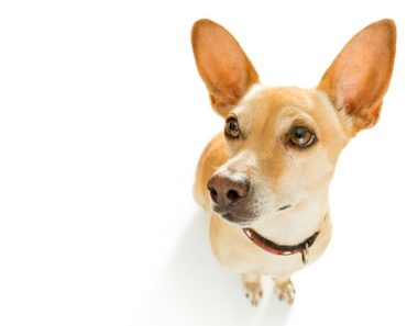 Can Raw Food Cause Uti In My Dog