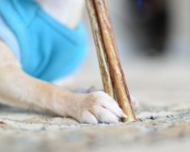 Does your dog love to slobber and chew on bully sticks? If so, you'll want to check your latest purchase. Find out which company is recalling their bully sticks due to possible salmonella contamination.