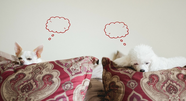 I recently picked up a copy of the book Do Dogs Deam? by Stanley Coren, a psychologist who studies canines. Read on to find out how we know dogs dream, what they dream about, and the signs of a dreaming doggy!