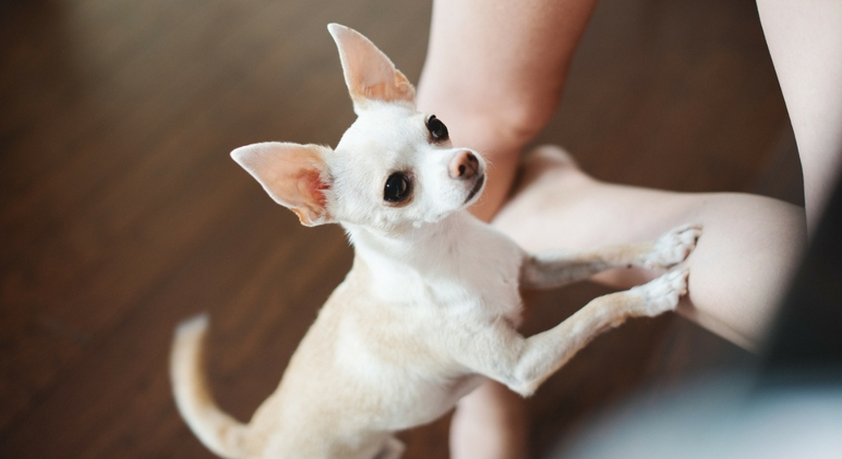 Are you a two-legged human with a four-legged shadow? If you're a dog parent then I'm pretty sure you know exactly what I'm talking about! Find out the most common reasons your dog follows you everywhere!