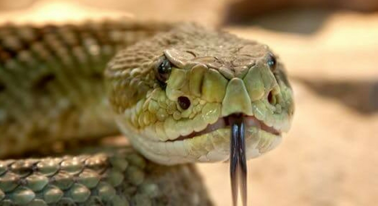 Spring has arrived, temperatures are rising, and the snake population is ready to wake from their long winter's nap. That means it's time to think about ways to protect your dog (and you) from snakes.Read on for tips to keep unwanted slithering visitors out of your yard and away from Fido.